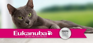 Eukanuba cat