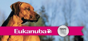 Eukanuba dog