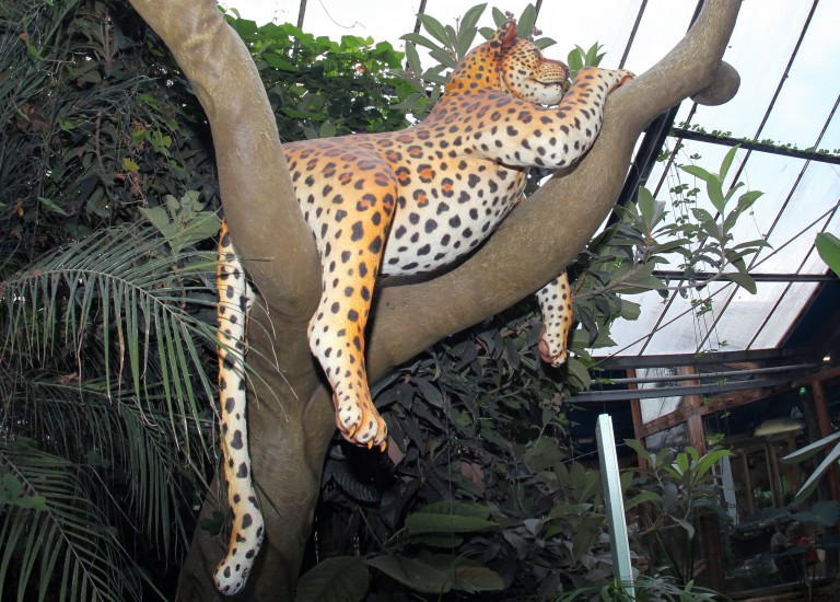 Jungleland big cat (crop)