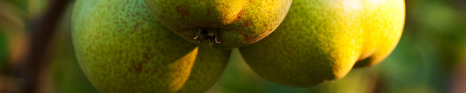 http://www.stjohnsgardencentre.co.uk/wp-content/uploads/2016/03/Pears_1500x300_acf_cropped.jpg