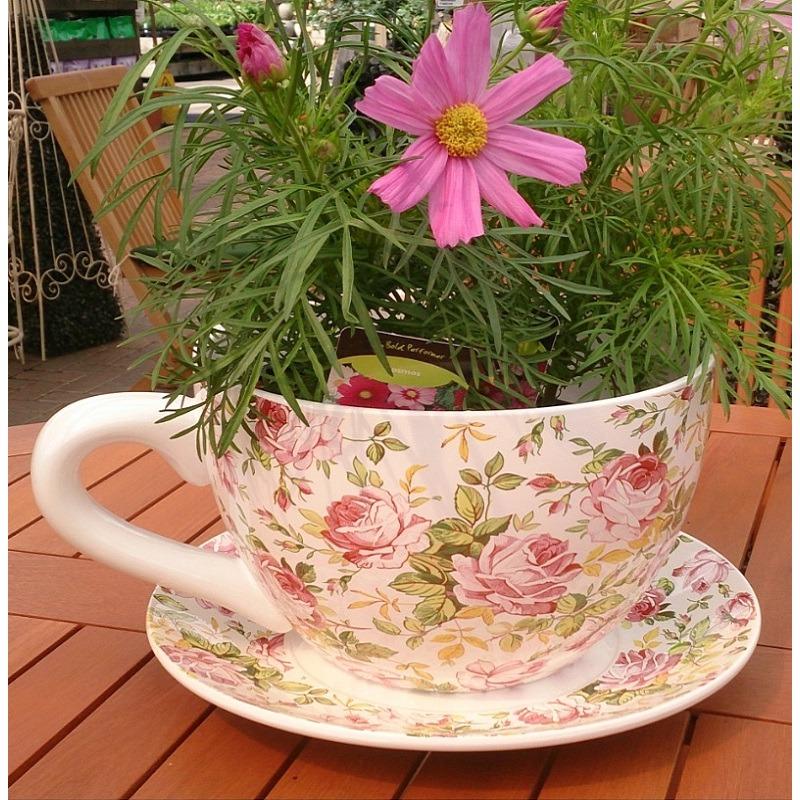 Cup Saucer Planter St Johns Garden Centre