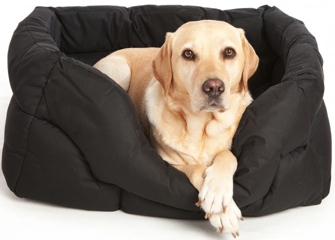 dog-bed-1_670x480_acf_cropped-1