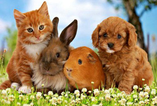 cat rabbit hamster dog