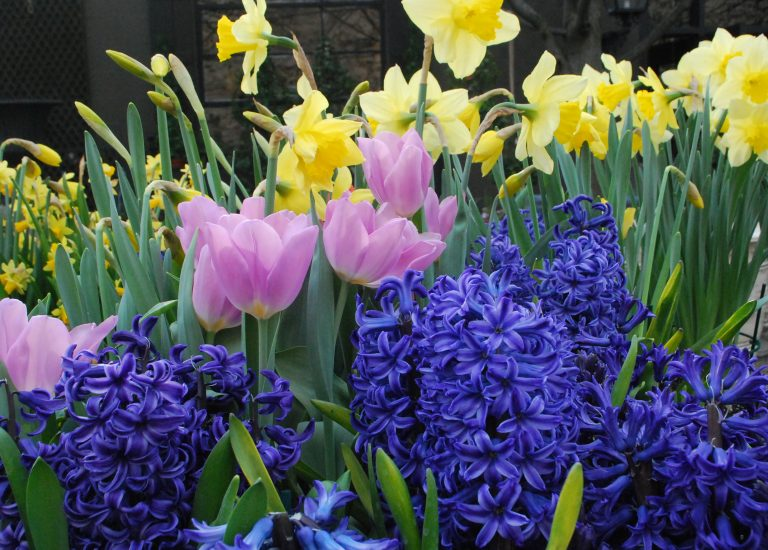 spring-bulbs_768x550_acf_cropped