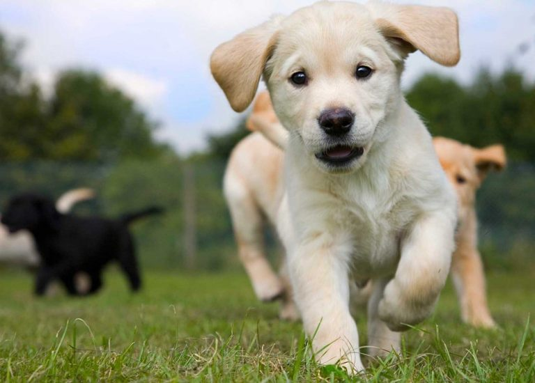 guidedogs-banner
