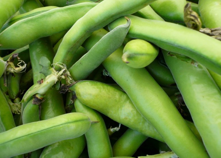 broad-bean_768x550_acf_cropped