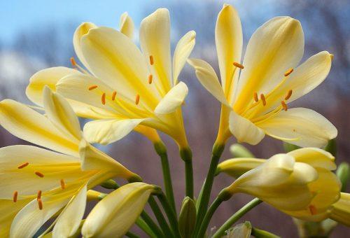 easter flower (sharper)