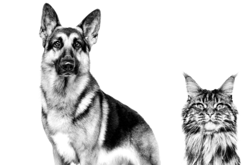 canin dog cat