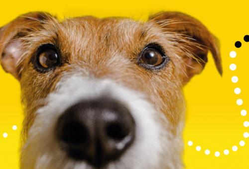 dogstrust[1]