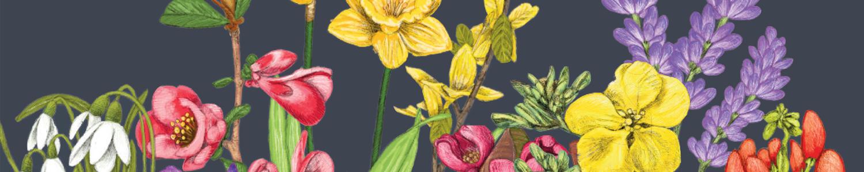 http://www.stjohnsgardencentre.co.uk/wp-content/uploads/2018/12/Ashford-flowers_1500x300_acf_cropped.jpg