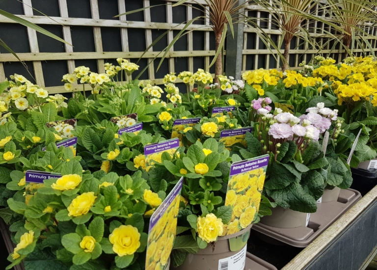 https://www.stjohnsgardencentre.co.uk/wp-content/uploads/2020/02/Spring-flowers-4_768x550_acf_cropped.jpeg