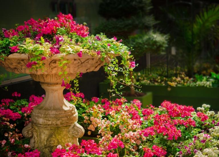 https://www.stjohnsgardencentre.co.uk/wp-content/uploads/2020/04/STJ-summer-flowers_768x550_acf_cropped.jpg