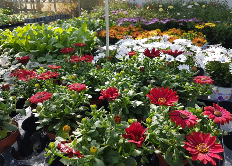 Bedding Plants May2 2020