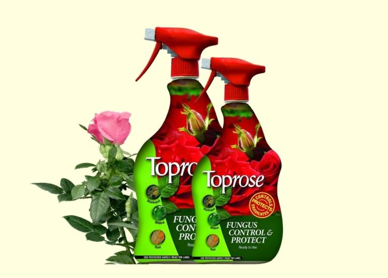 toprose web