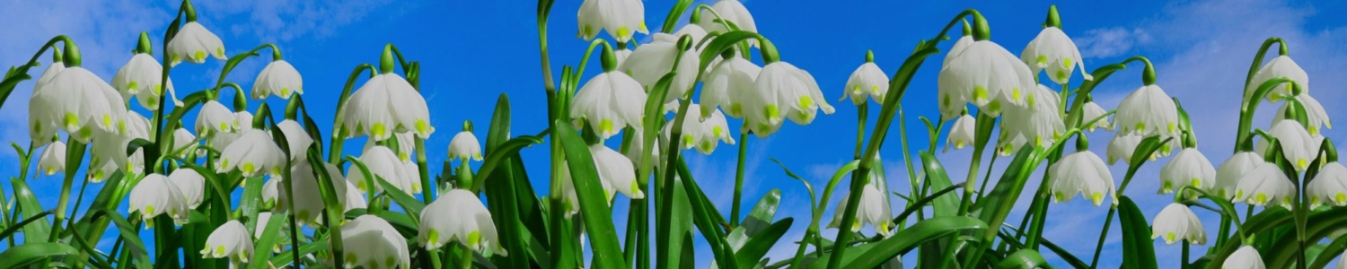 https://www.stjohnsgardencentre.co.uk/wp-content/uploads/2020/08/Snowdrops-2_1500x300_acf_cropped.jpg