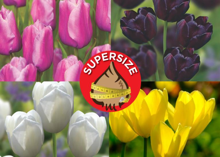 Spring Bulbs (4)