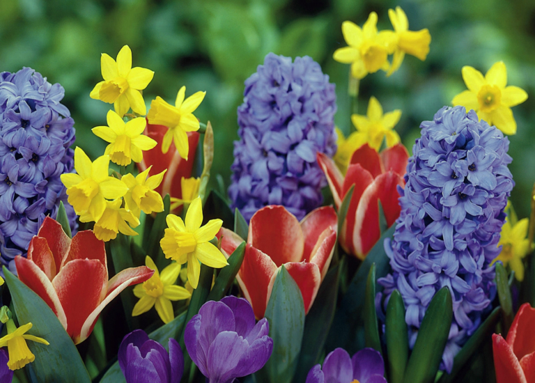 https://www.stjohnsgardencentre.co.uk/wp-content/uploads/2020/08/daffs-header-pic-brighter_768x550_acf_cropped.jpg