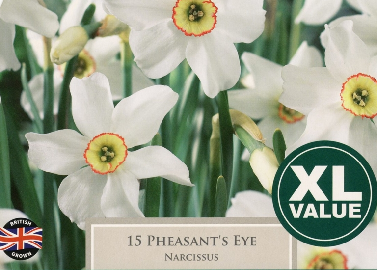 XL127 Pheasants Eye (2)