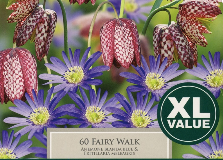 XL401 Fairy Walk (3)